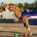 HORSEって何?アメリカ式バスケシューティングゲームを解説